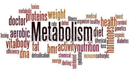 stock-photo-metabolism-word-cloud-concept-on-white-background-537960925