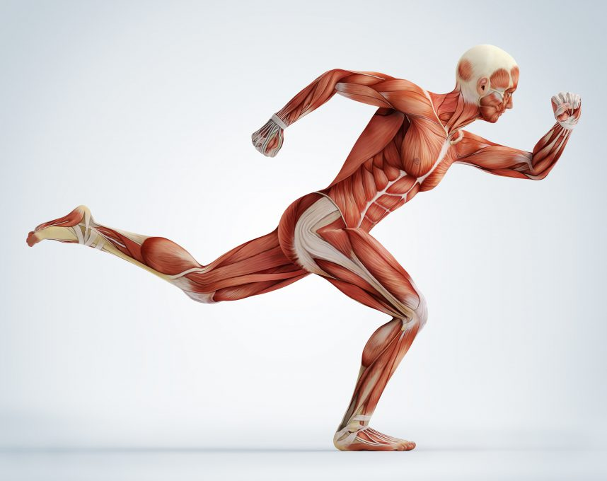 Collagen-in-Body-in-Motion-858x680.jpg