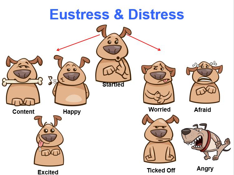 Eustress-and-Distress.png